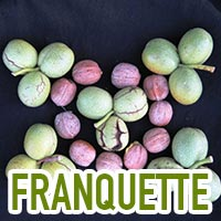franquette